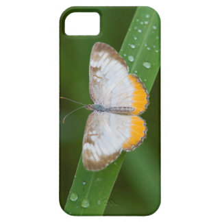 Cameron County, Texas. Common Mestra iPhone SE/5/5s Case