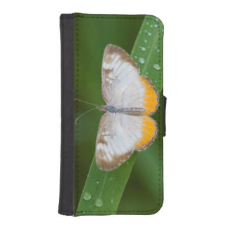 Cameron County, Texas. Common Mestra iPhone SE/5/5s Wallet