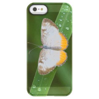 Cameron County, Texas. Common Mestra Permafrost® iPhone SE/5/5s Case
