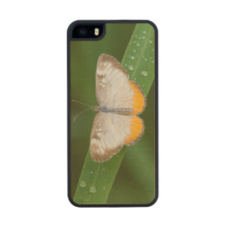 Cameron County, Texas. Common Mestra Wood Phone Case For iPhone SE/5/5s