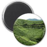 Cameron Highland Tea Plantation, Malaysia Refrigerator Magnet