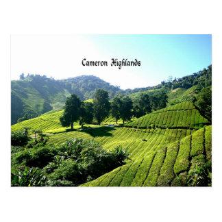 Cameron Highlands, Tea Plantation, Malaysia Postcard