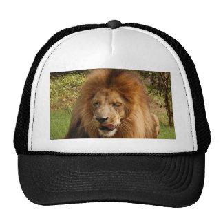 Cameron_toy_003_4x6 Trucker Hat