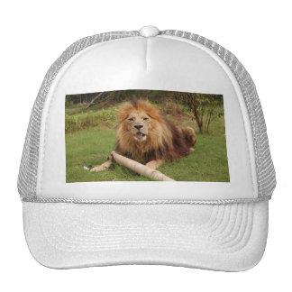 Cameron_toy_005_4x6 Trucker Hat