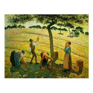 Camilo Pissarro- Apple que escoge en Eragny-sur-Ep Tarjetas Postales