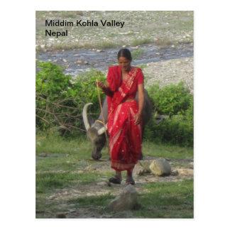Caminando el búfalo de agua tarjeta postal