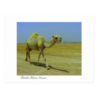 Caminando el largo camino - camello en la isla de postal