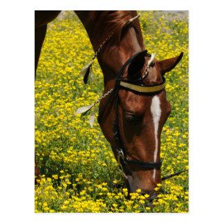 Caminante con las flores amarillas tarjetas postales