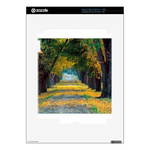 Camino alineado árbol Louisville Kentucky del otoñ Calcomanías Para El iPad 2