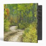Camino con colores del otoño y álamos tembloses en