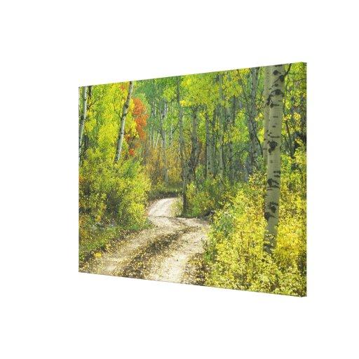 Camino con colores del otoño y álamos tembloses en impresión en lienzo estirada