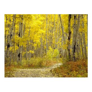 Camino con colores del otoño y álamos tembloses en tarjetas postales