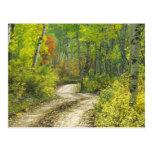 Camino con colores del otoño y álamos tembloses en postal