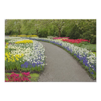 Camino de la acera a través de los tulipanes y de  cojinete