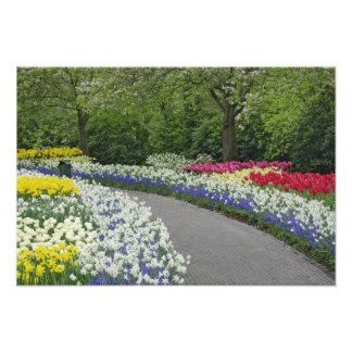 Camino de la acera a través de tulipanes y de narc cojinete