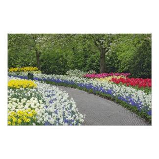 Camino de la acera a través de tulipanes y de narc fotografías