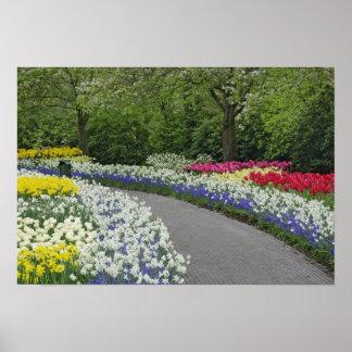 Camino de la acera a través de tulipanes y de narc póster