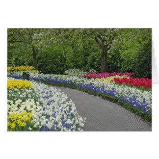 Camino de la acera a través de tulipanes y de narc tarjeta de felicitación
