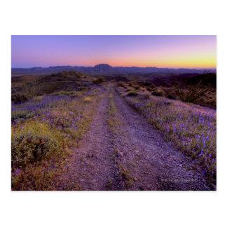 Camino de la grava del desierto tarjetas postales