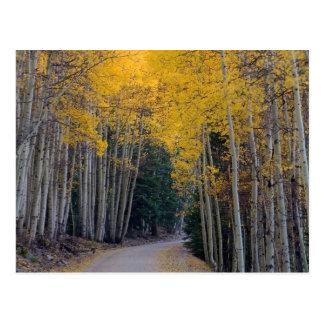 Camino de la montaña enmarcado por los álamos postales