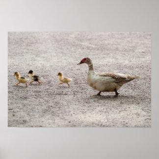 Camino de la travesía de la familia del pato poster