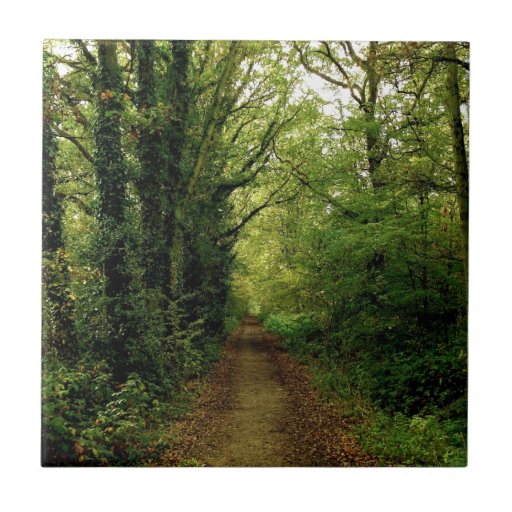 Camino de las naturalezas del árbol azulejo ceramica