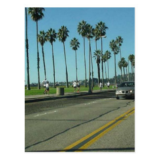 Camino de Santa Barbara Palmtrees Tarjetas Postales