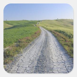 Camino de tierra a través de los campos y de las pegatina cuadrada