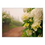 Camino de tierra y hydrangeas tarjeta de felicitación