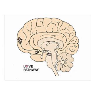 Camino del amor: Amor en el cerebro Postales