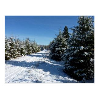 Camino del invierno tarjetas postales