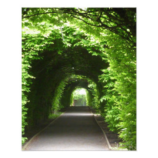 Camino sombreado del jardín del cenador cojinete