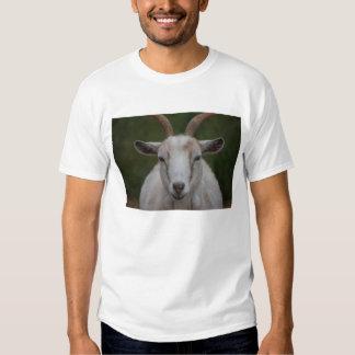 Camisa blanca de la cabra