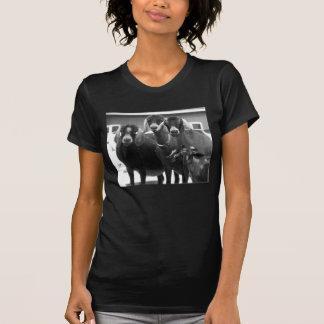 Camisa blanco y negro de la familia de la cabra