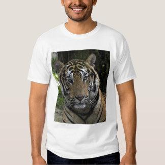Camisa cercana cara arriba del tigre
