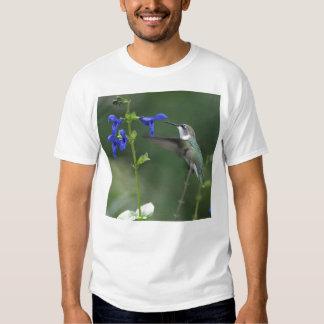 Camisa del azul del zafiro del salvia del pájaro