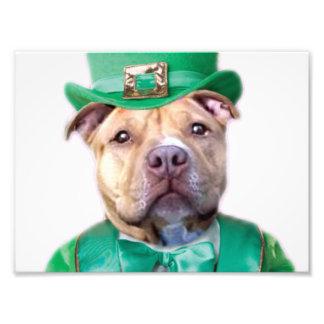 Camisa del perro de Pitbull del irlandés Impresiones Fotograficas