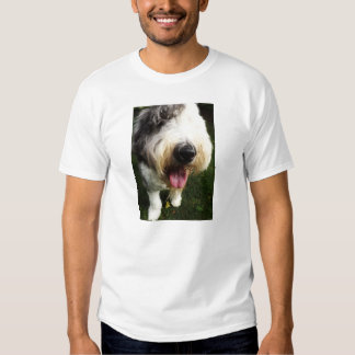 Camisa inglesa vieja del perro pastor - nariz