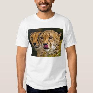 Camiseta del adulto de los leopardos playera