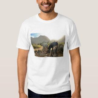 Camiseta del Burro del bebé Poleras