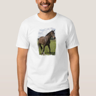 Camiseta excelente del caballo remeras