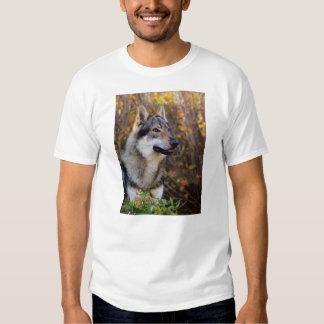 Camiseta Hombre Foto T-Shirt