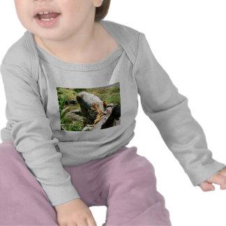Camiseta larga del tigre de la manga del bebé
