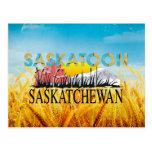 CAMISETA Saskatoon Postales