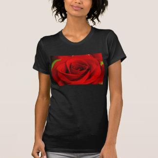 Camiseta suave del rosa rojo playeras