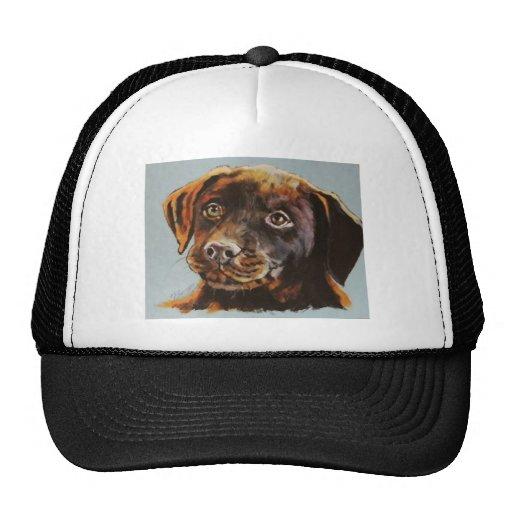 Camisetas animales gorra