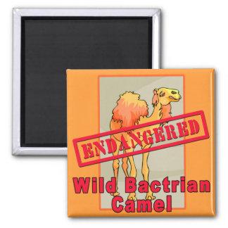 Camisetas salvajes en peligro del camello imán cuadrado