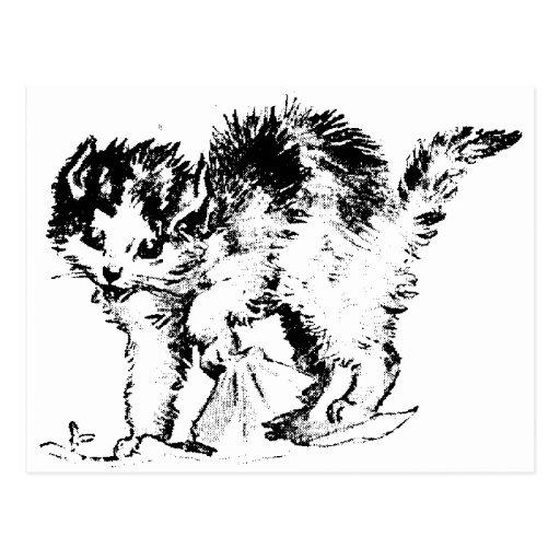 Camisetas y regalos 154 del gatito tarjeta postal