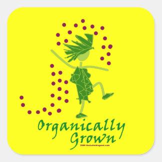 Camisetas y regalos orgánico crecidos colcomanias cuadradas