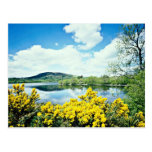 Camlough Lough, County Down, Ireland  flowers Post Card